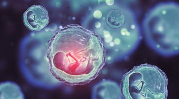 Embriyolar Rahim İçine Nasıl Yerleştirilir?